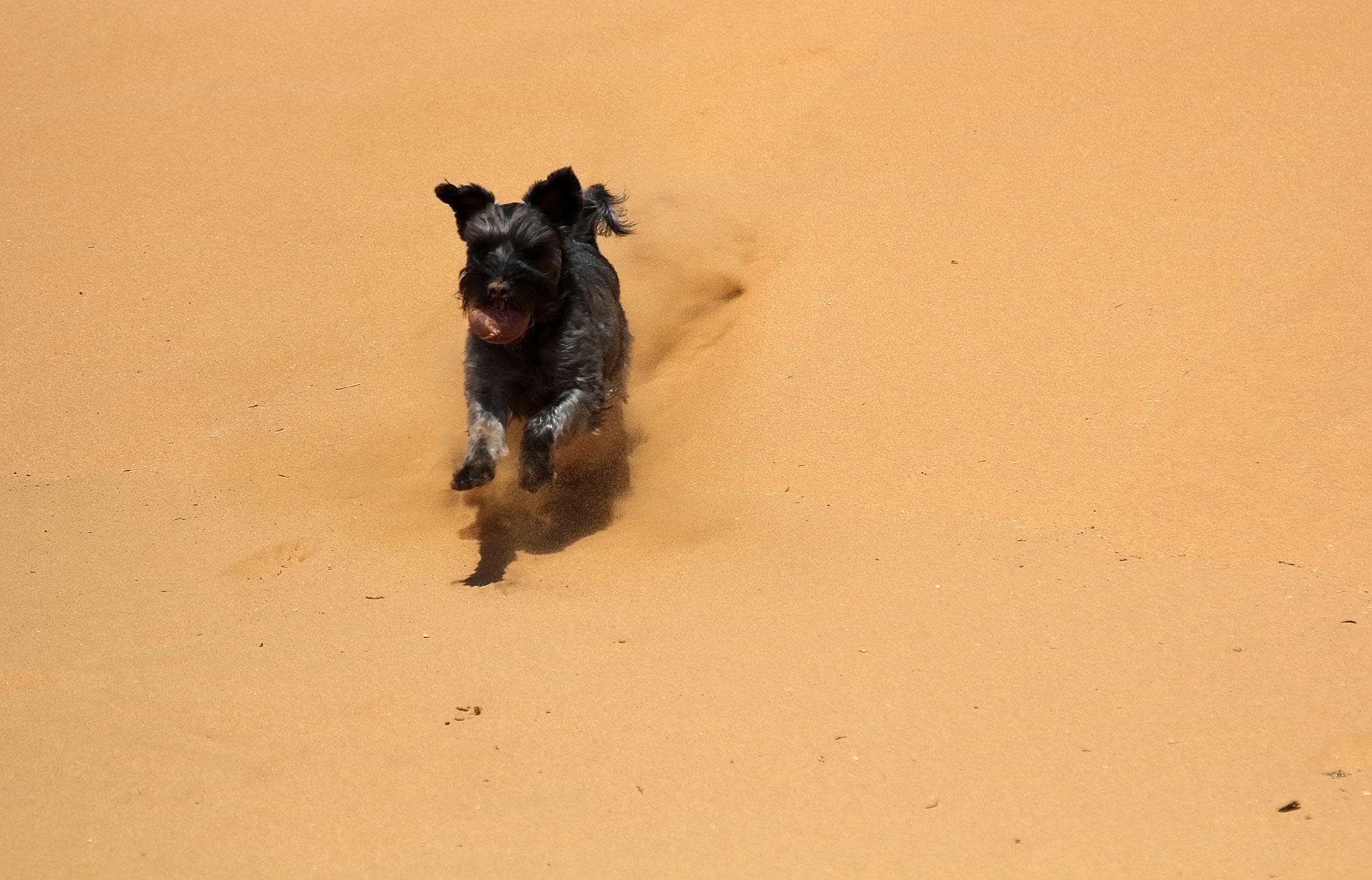 Pies na pustyni