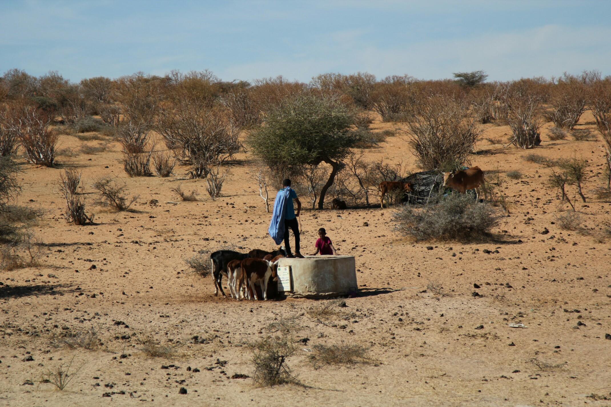 Mauretania.Wioska.Chłopiec przy studni.