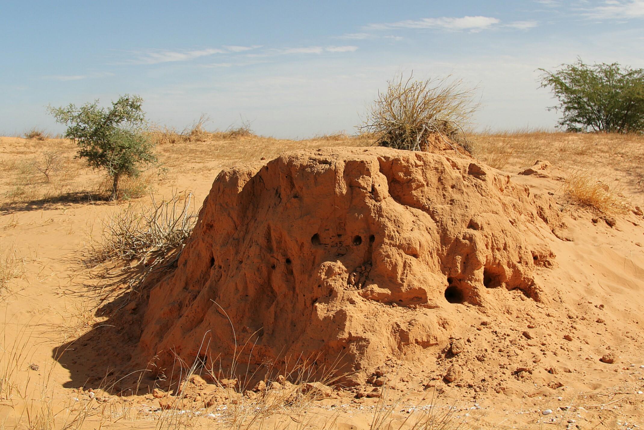 Mauretania.Termitiera