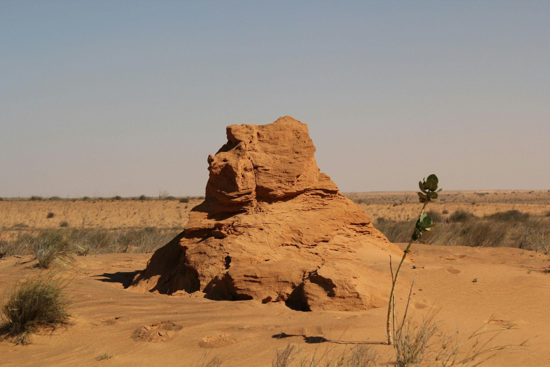 Mauretania.Termitiera wzdłuż drogi prowadzącej do kompleksu turystycznego w  Parku Narodowym Banc d'Arguin.