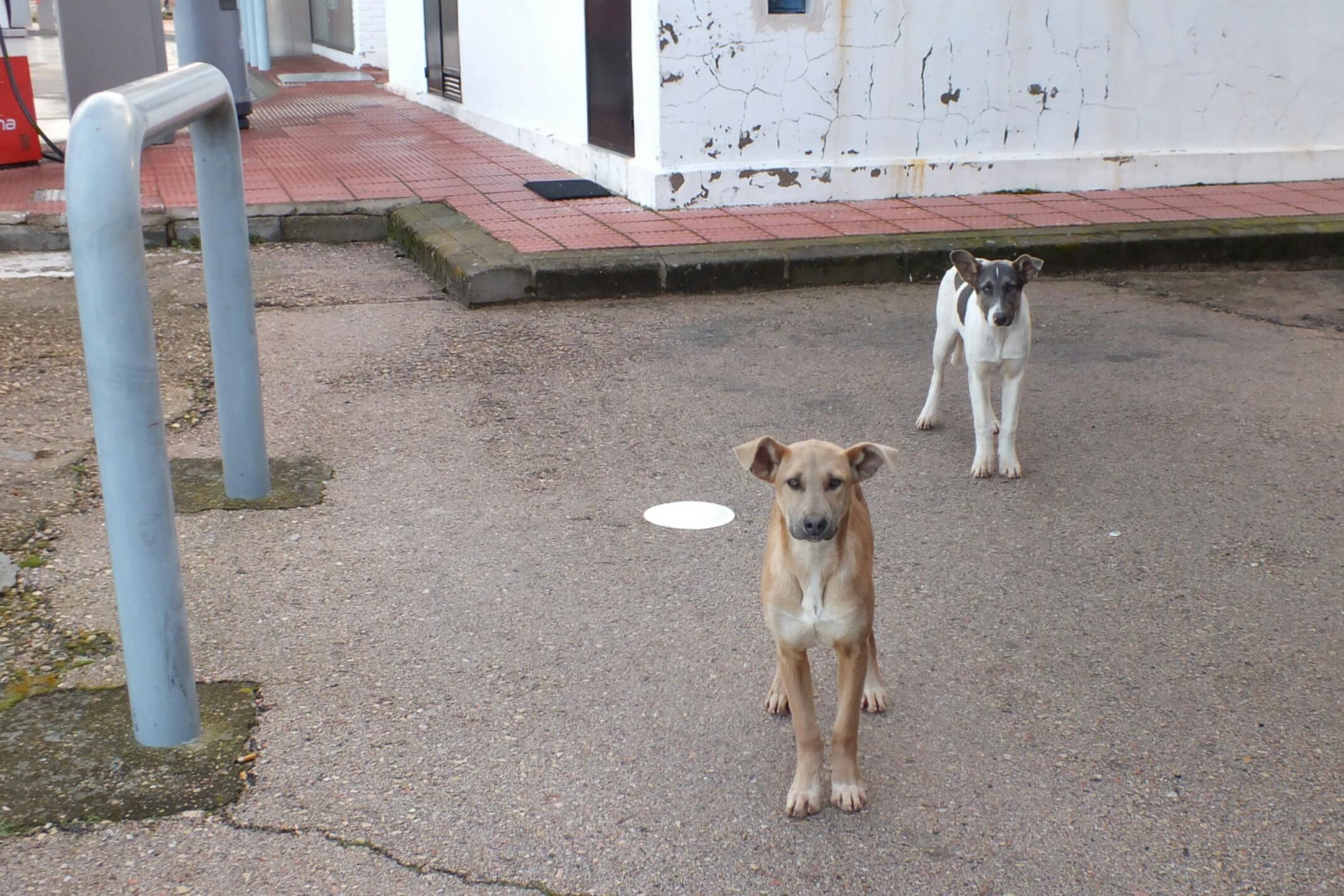 Bezdomne psy w muzułmańskich miastach