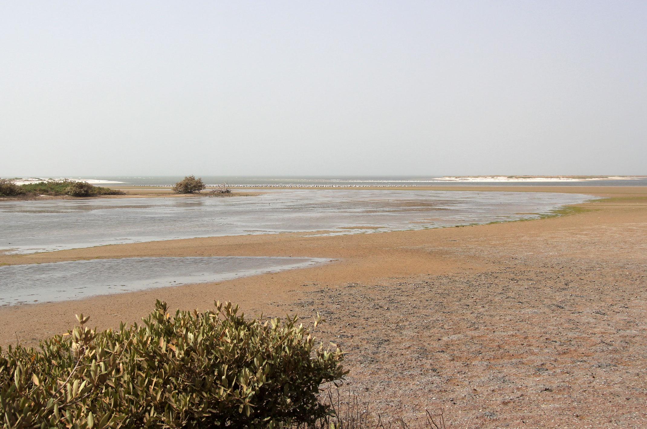 Mauretania.Park Narodowy Banc d'Arguin