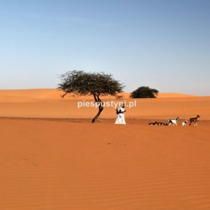 Pastuszek - Blog podróżniczy - PIES PUSTYNI