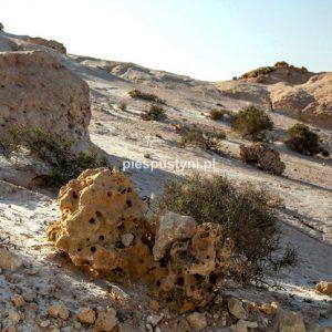 Skamieliny - Blog podróżniczy - PIES PUSTYNI