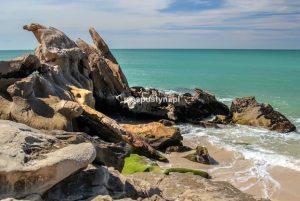 Bajeczne Portorico - Blog podróżniczy - PIES PUSTYNI