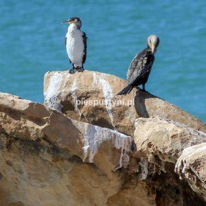 Dwa kormorany - Blog podróżniczy - PIES PUSTYNI