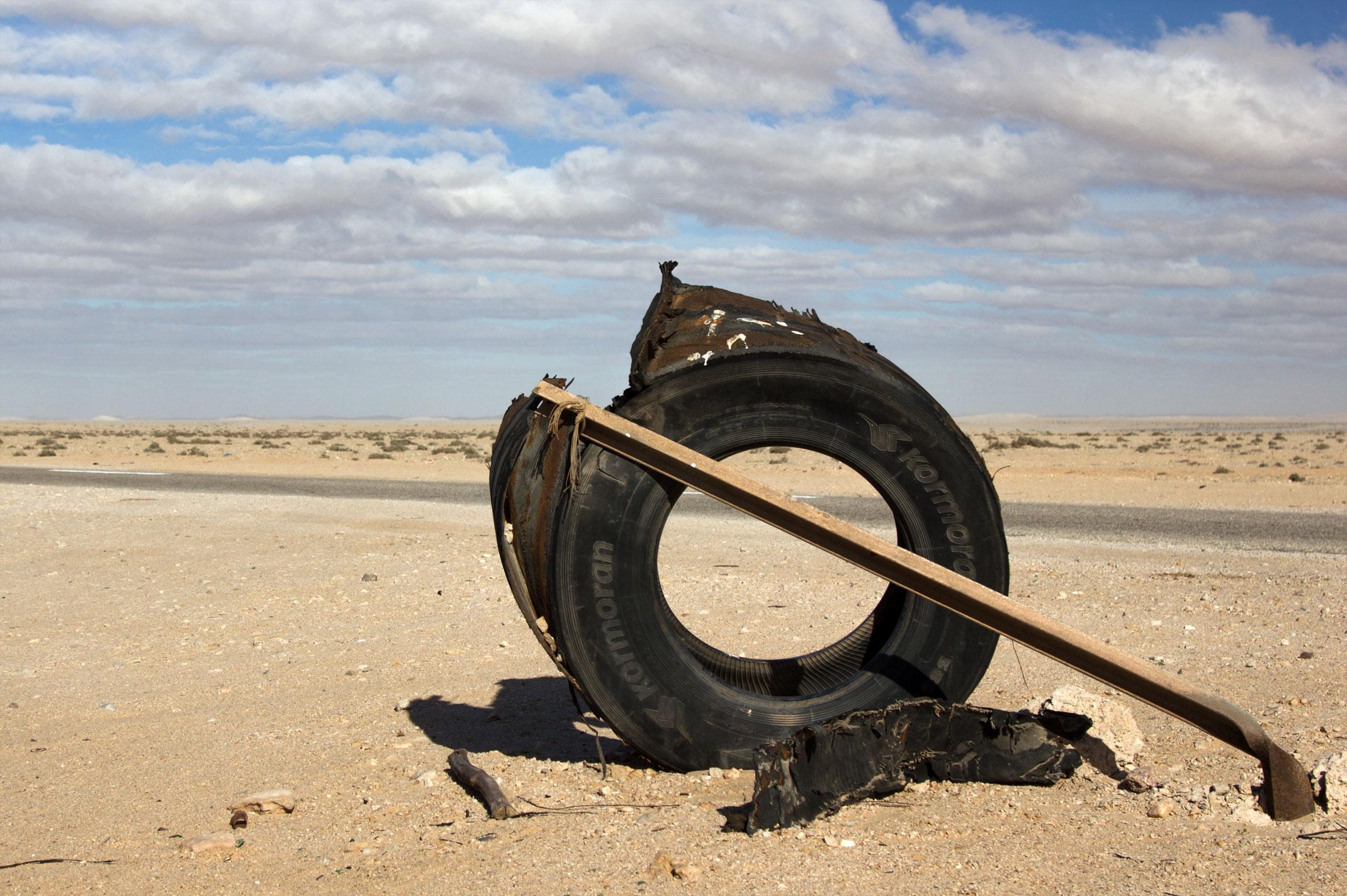 Opona kormoran na Saharze