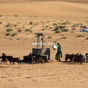 Kozy przy studni - Blog podróżniczy - PIES PUSTYNI