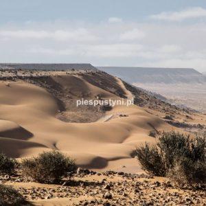 Sahara - Blog podróżniczy - PIES PUSTYNI