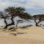 O dwóch takich,co z drążkiem po pustyni chodzili
