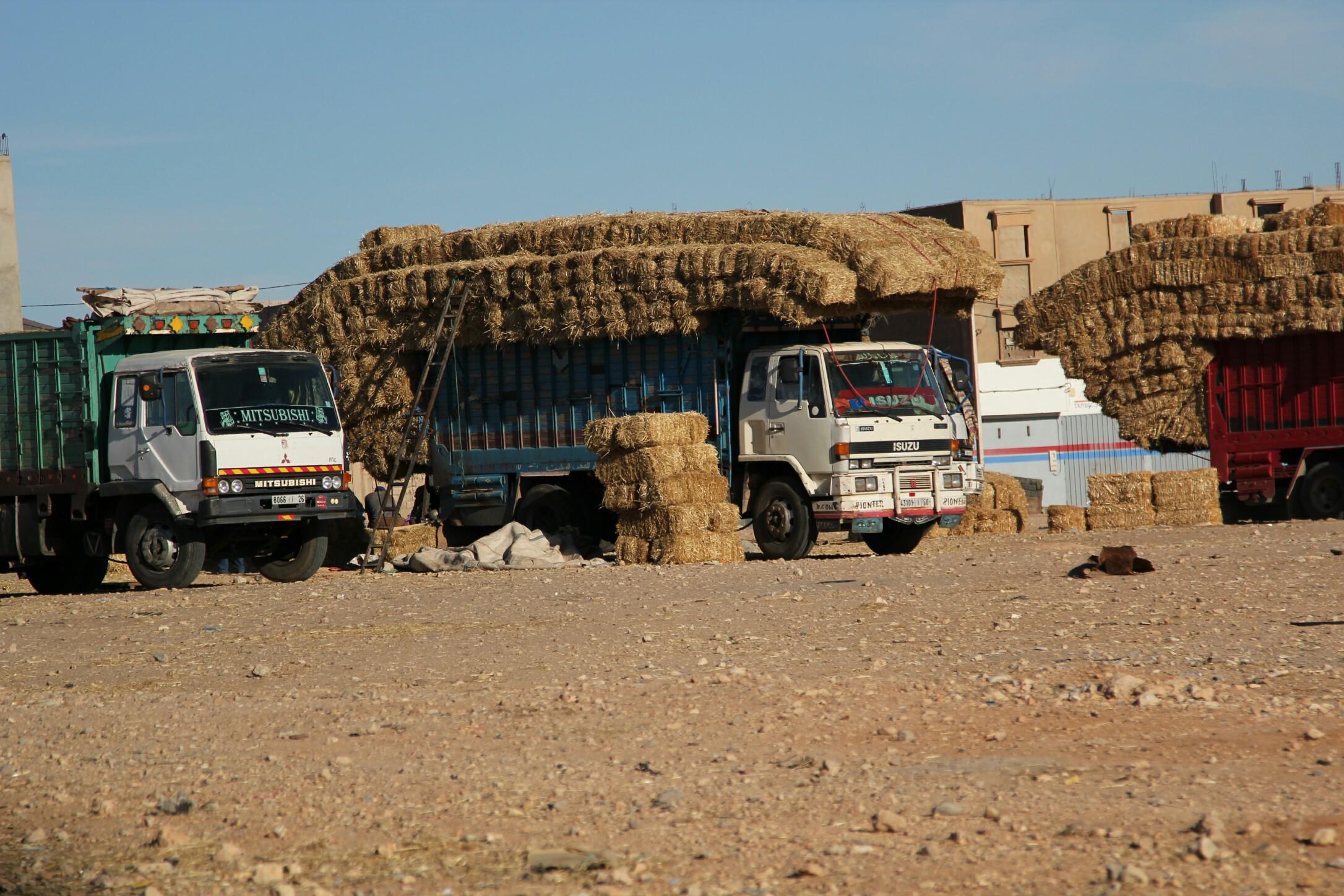 Maroko.Sprzedaż siana bezpośrednio z samochodu dostawczego.
