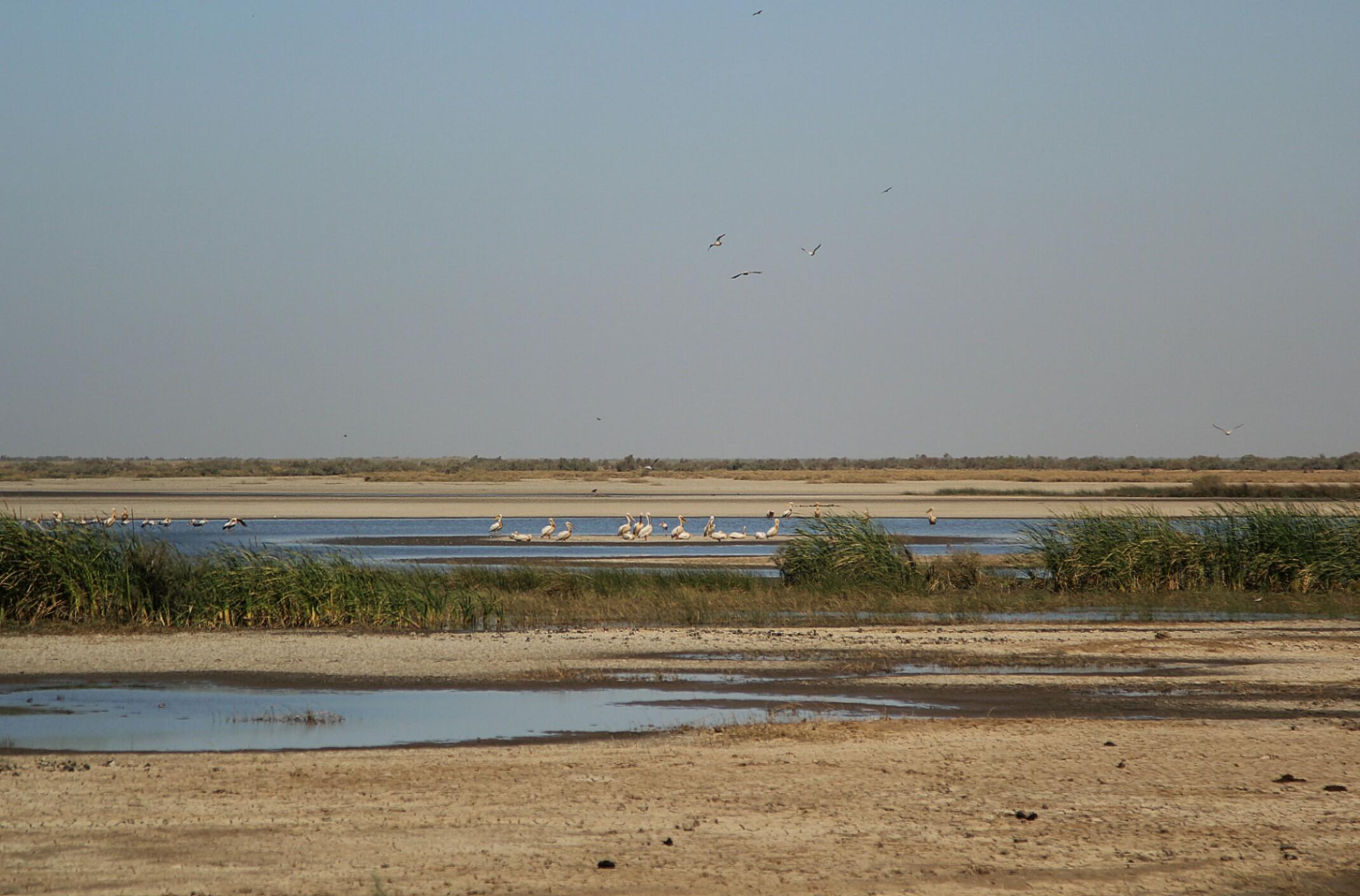 Park Narodowy Banc d'Arguin. Mauretania