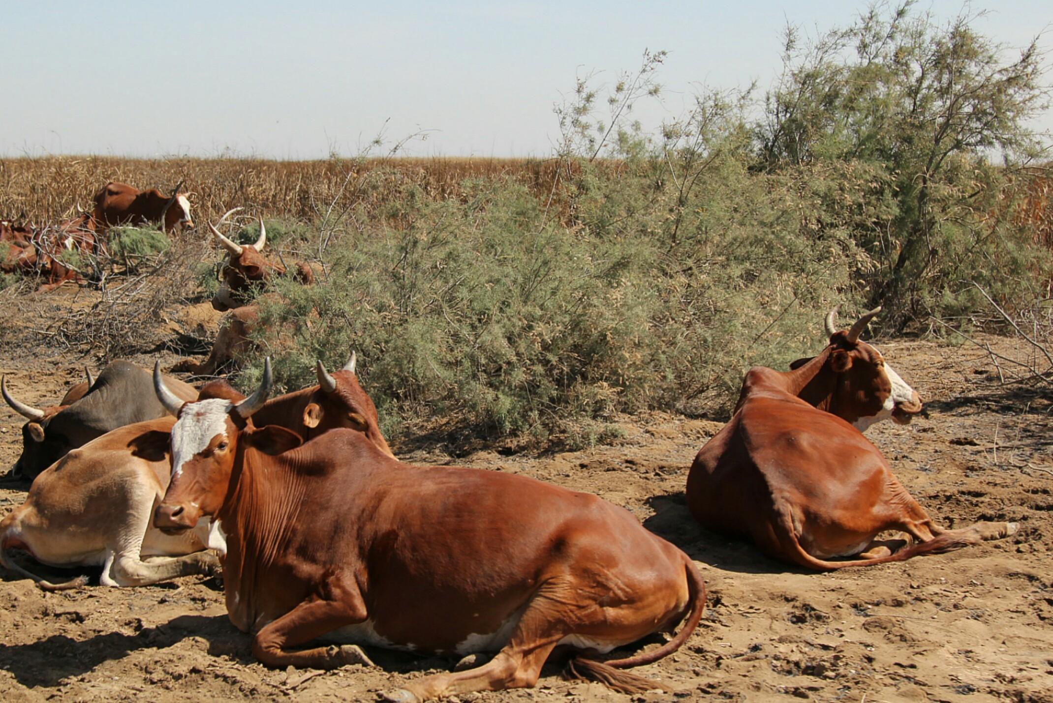 Mauretania, Parc National du Diawling