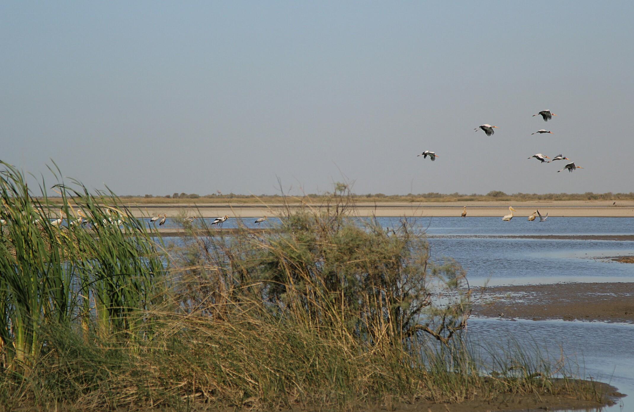 Mauretania,Prac National du Diawling