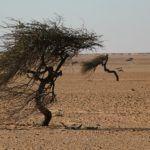 Między Marokiem,a Mauretanią – na pasie ziemi niczyjej