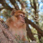 W małpim gaju czyli wodospady  Szallalat Uzud