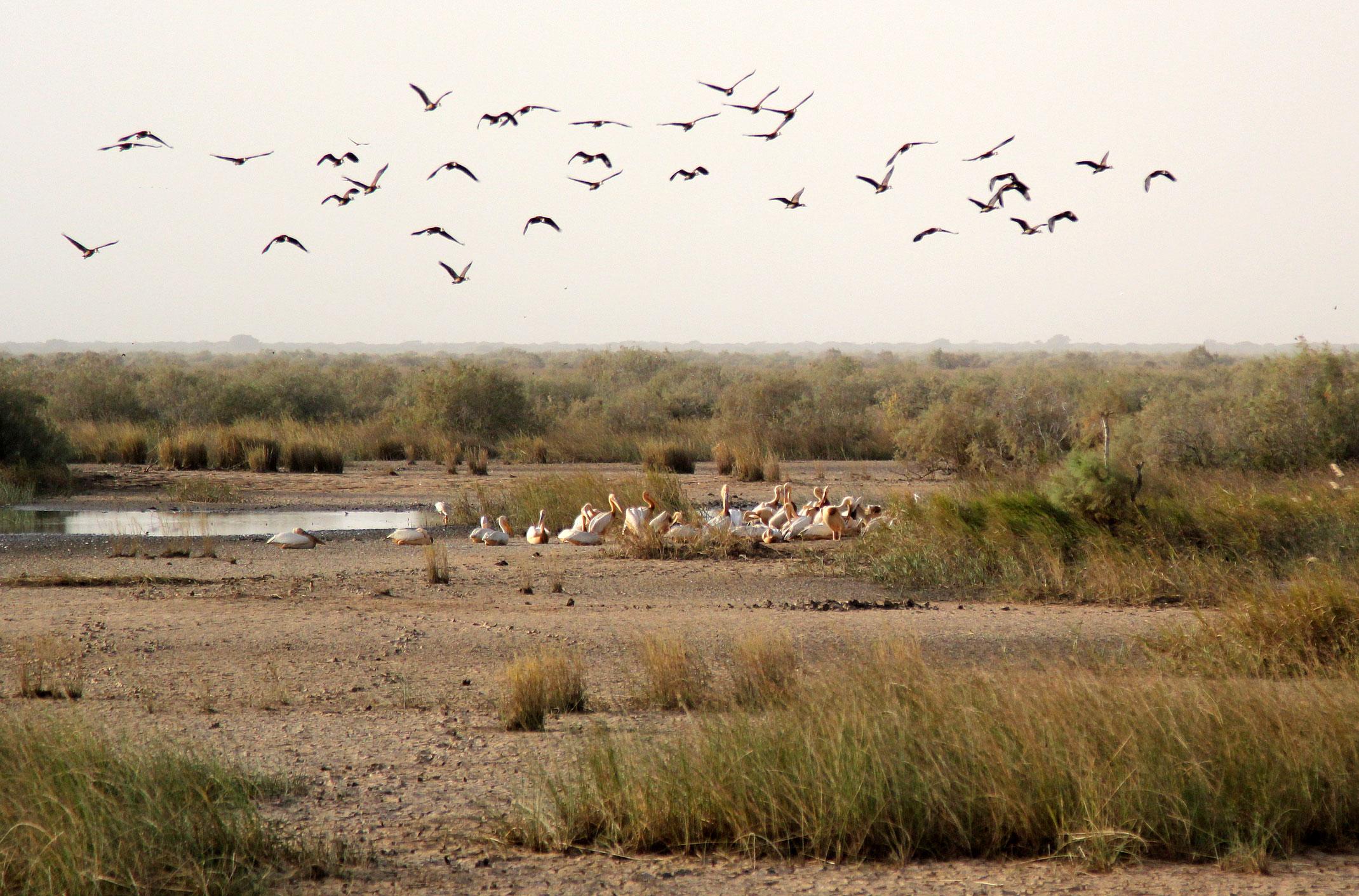 Mauretania. Park Narodowy Diawling