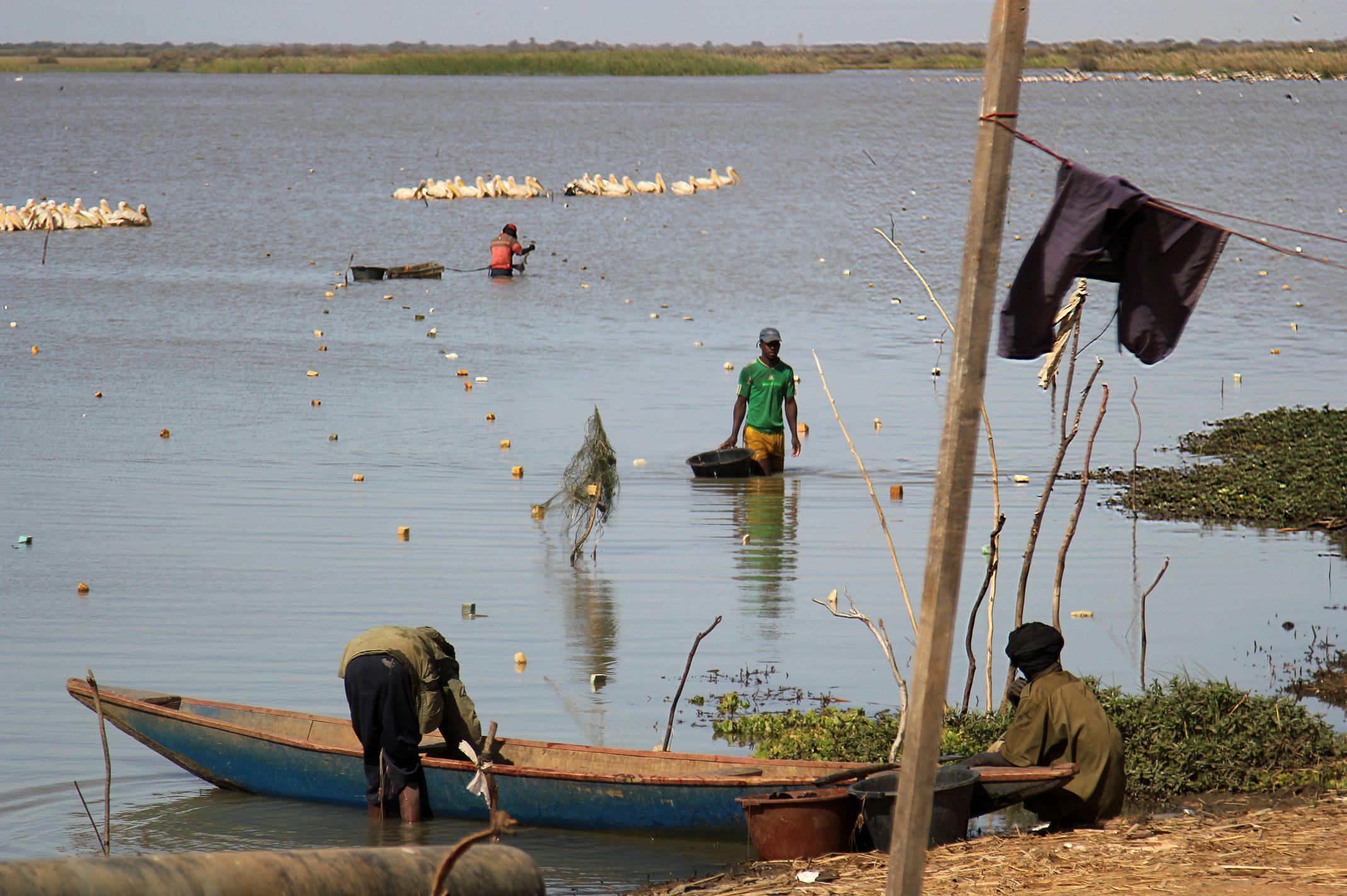 Mauretania.Park Narodowy Diawling