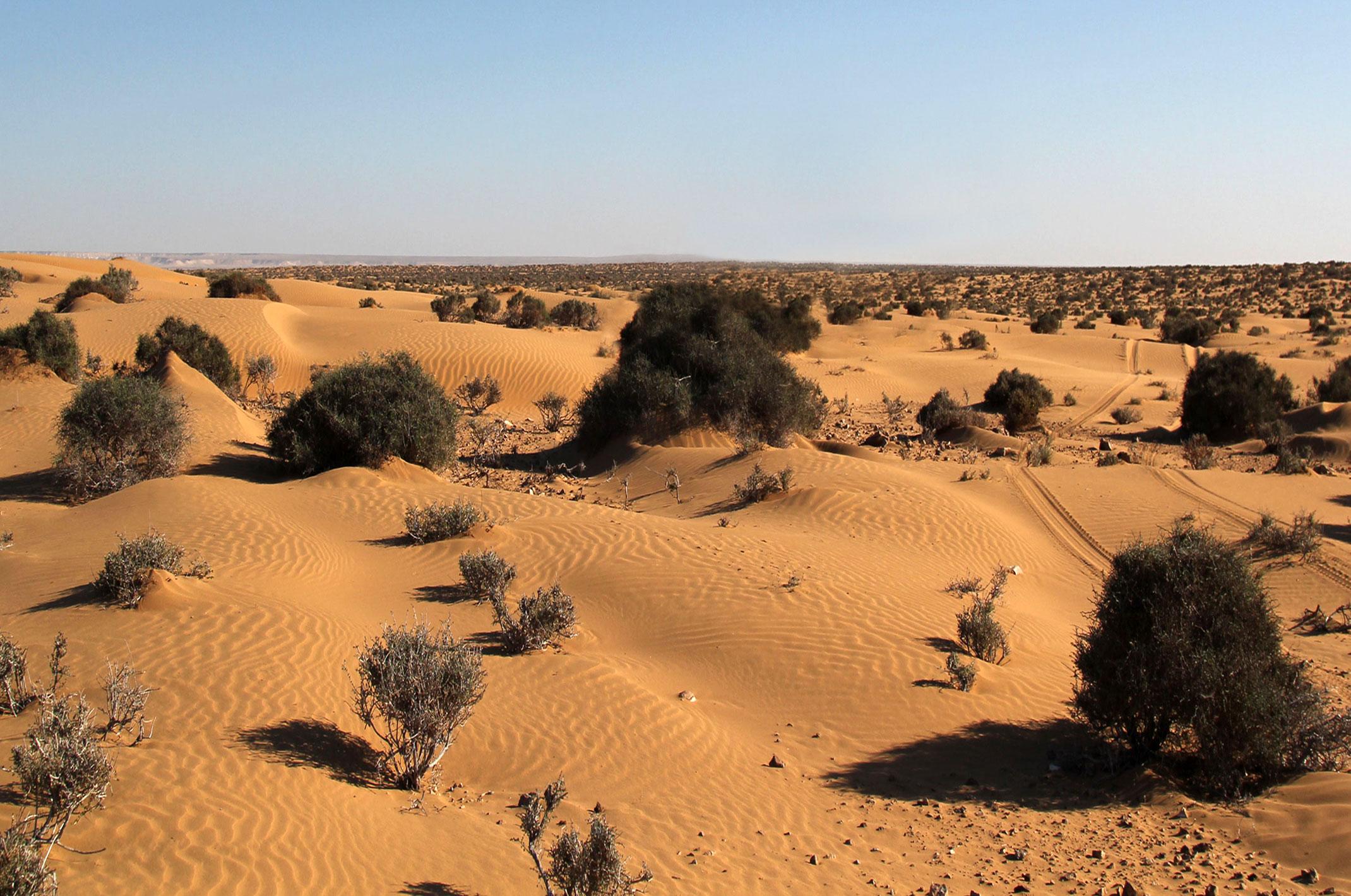 Sahara Zachodnia.Nie ma dróg,jedziemy po śladach