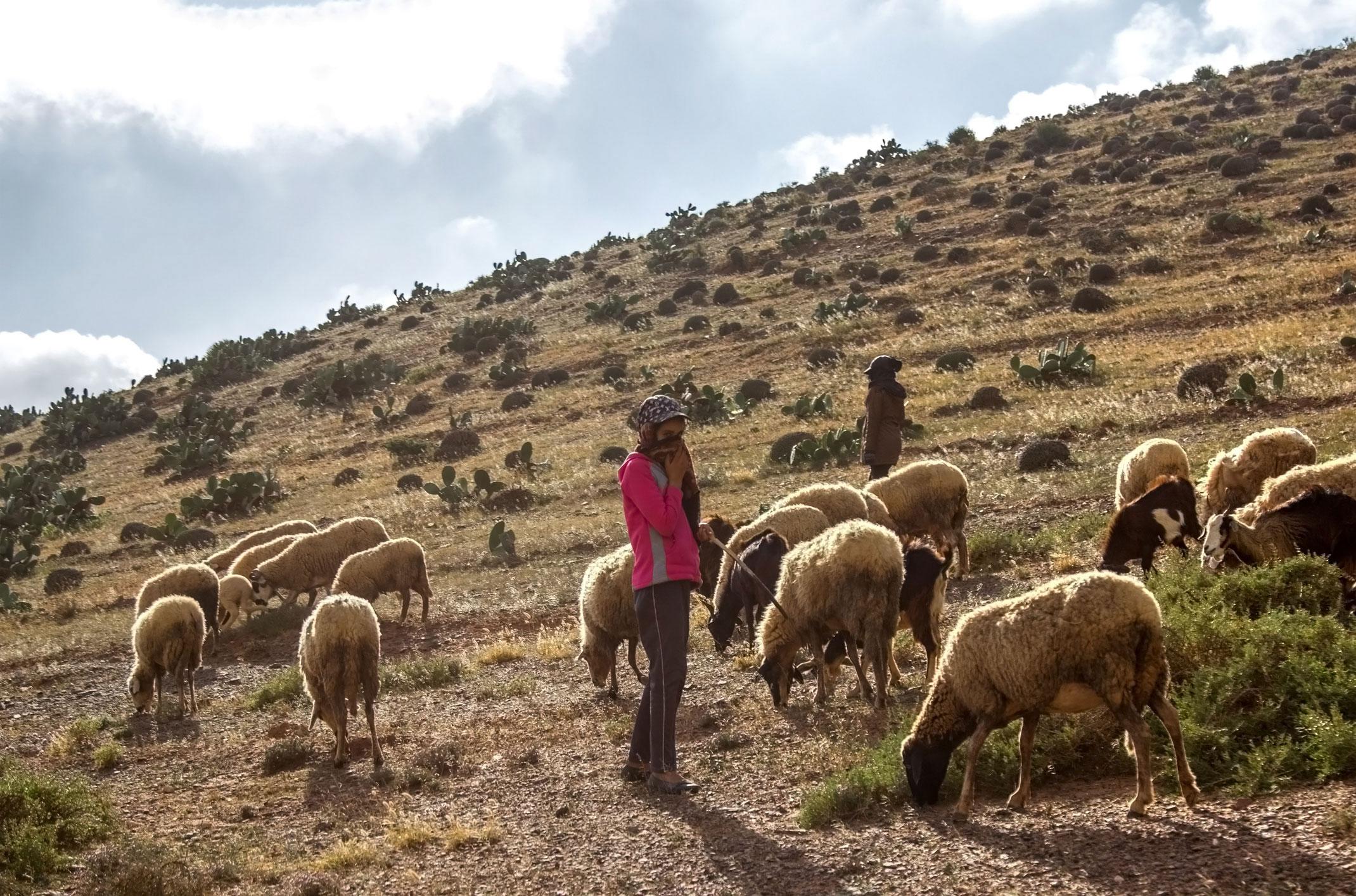 Maroko.Pastuszka z owcami