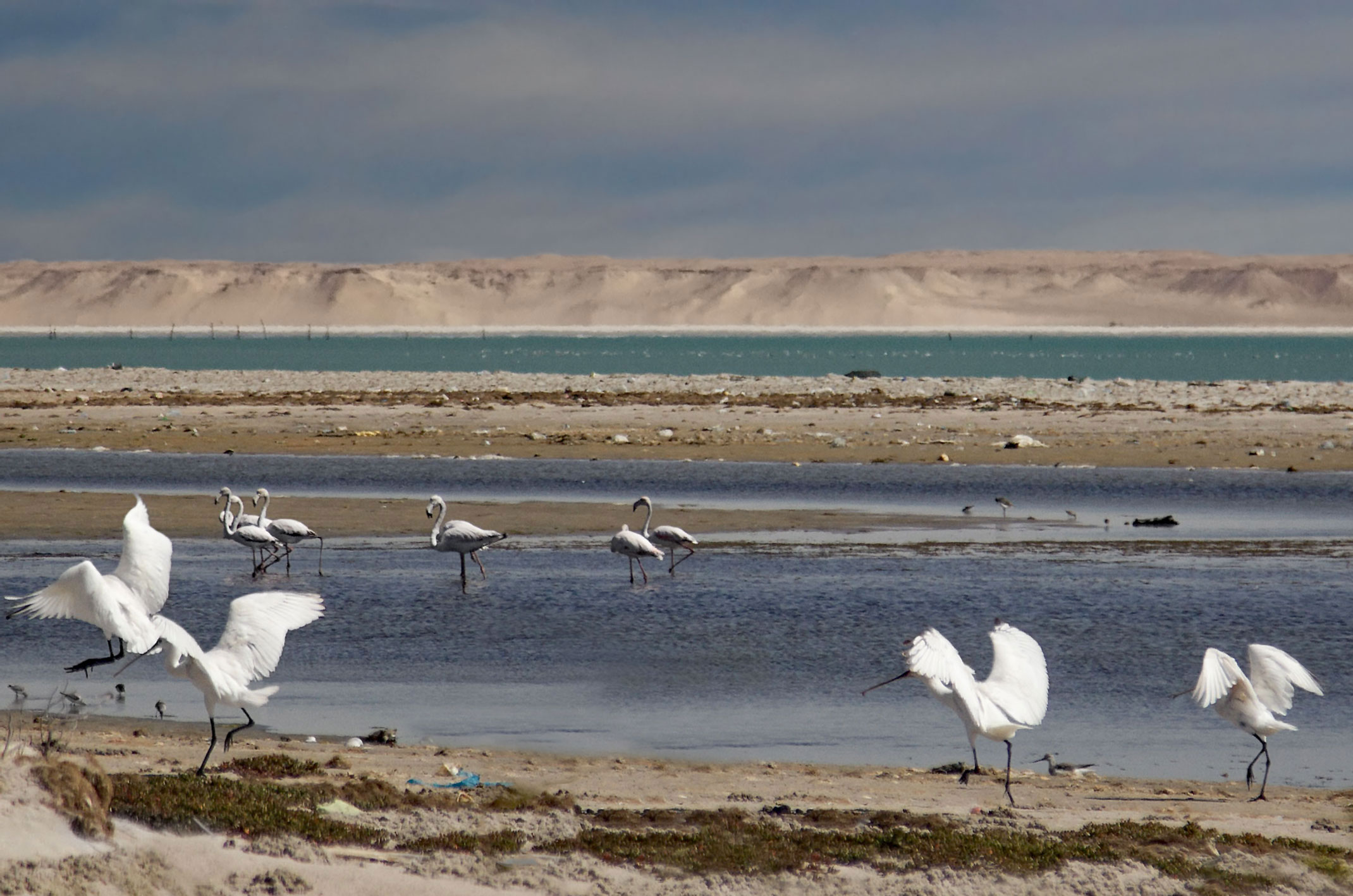Zatoka Cintra