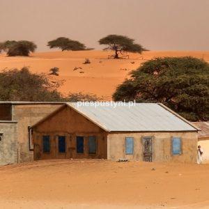 Dom na pustyni - Blog podróżniczy - PIES PUSTYNI