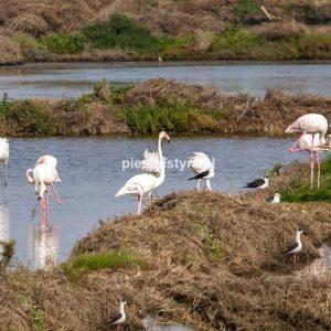 Flamingi w stawach rybnych - Blog podróżniczy - PIES PUSTYNI
