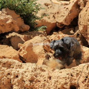 Jasiek-pies pustyni - Blog podróżniczy - PIES PUSTYNI
