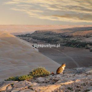 Kot na klifie - PIES PUSTYNI
