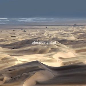 Plaża Aoreory - PIES PUSTYNI