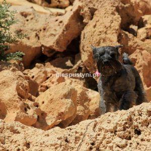 Pies pustyni - Blog podróżniczy - PIES PUSTYNI