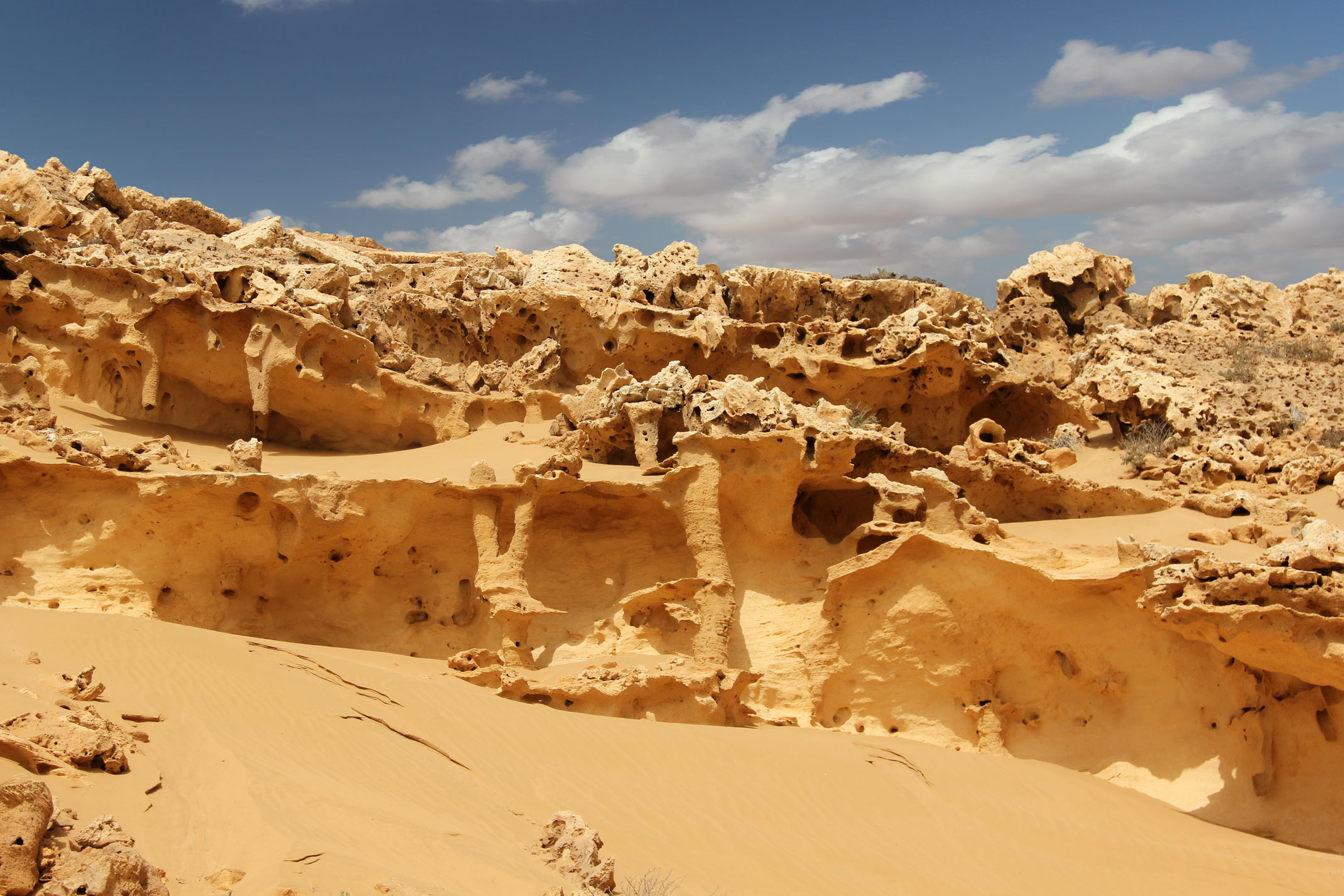 Sahara Zachodnia,piespustyni.pl