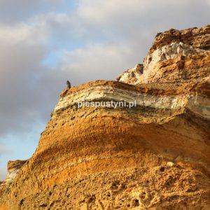 Widok z klifu - Blog podróżniczy - PIES PUSTYNI