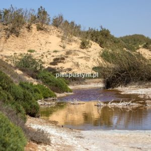 Woda na pustyni - Blog podróżniczy - PIES PUSTYNI