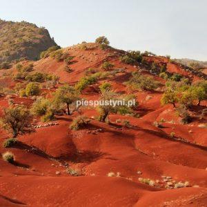 Kolor Maroka - Blog podróżniczy - PIES PUSTYNI