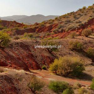 Kolorowe Maroko - Blog podróżniczy - PIES PUSTYNI