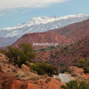Zima w Maroku - Blog podróżniczy - PIES PUSTYNI