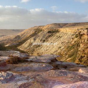 Haoui en Naam - Blog podróżniczy - PIES PUSTYNI
