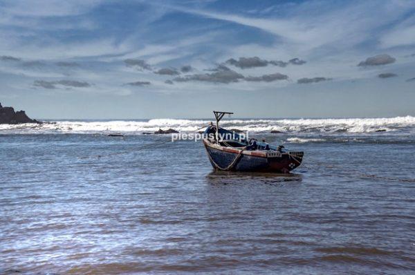 Na spokojnej wodzie - Blog podróżniczy - PIES PUSTYNI
