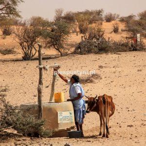 Woda ze studni - Blog podróżniczy - PIES PUSTYNI