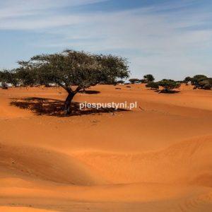 Piaski Mauretanii - Blog podróżniczy - PIES PUSTYNI