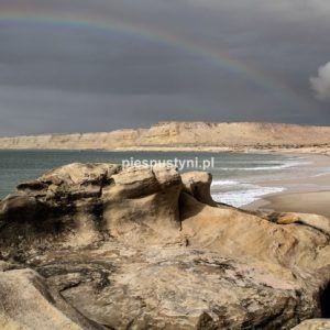 Tęczowe Portorico - Blog podróżniczy - PIES PUSTYNI