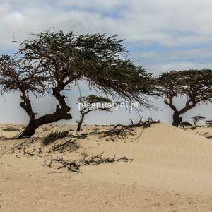 Roślinność pustyni - Blog podróżniczy - PIES PUSTYNI