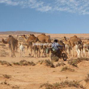 Poganiacz stada - Blog podróżniczy - PIES PUSTYNI