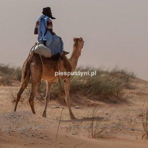 Pustynnym szlakiem - Blog podróżniczy - PIES PUSTYNI