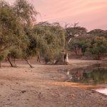 Krokodyle z Tamorte Bukari-Mauretania