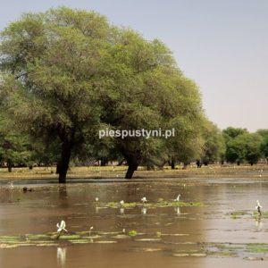 Tamorte Bukari 1 - Blog podróżniczy - PIES PUSTYNI