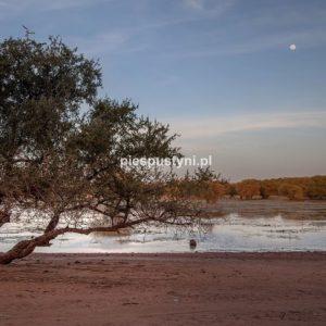 Tamorte Bukari 3 - Blog podróżniczy - PIES PUSTYNI