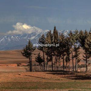 Zima w Maroku 2 - Blog podróżniczy - PIES PUSTYNI