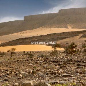 Pustynny region Adrar 1 - Blog podróżniczy - PIES PUSTYNI